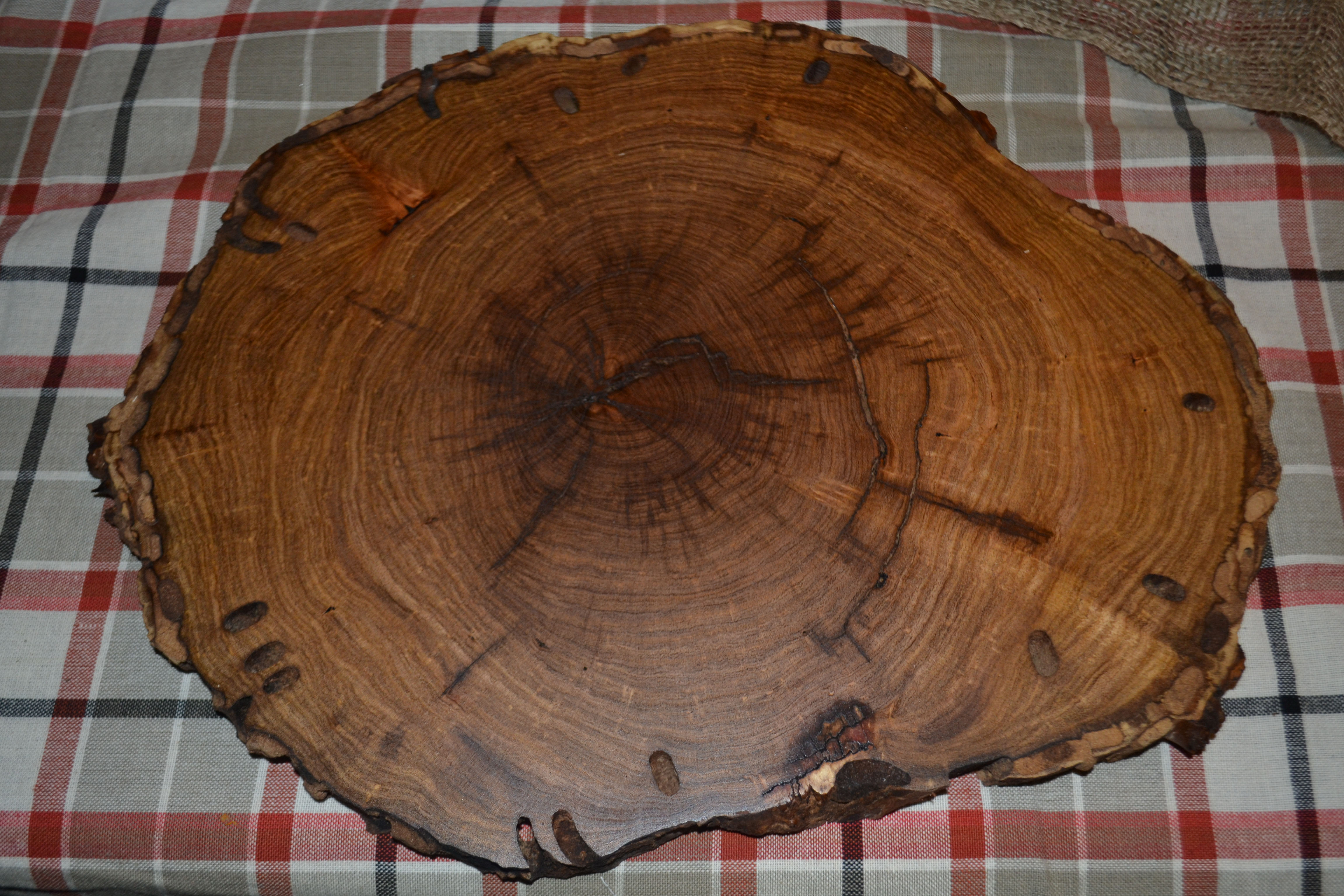 Wood slice chargers for Large tree trunk slices