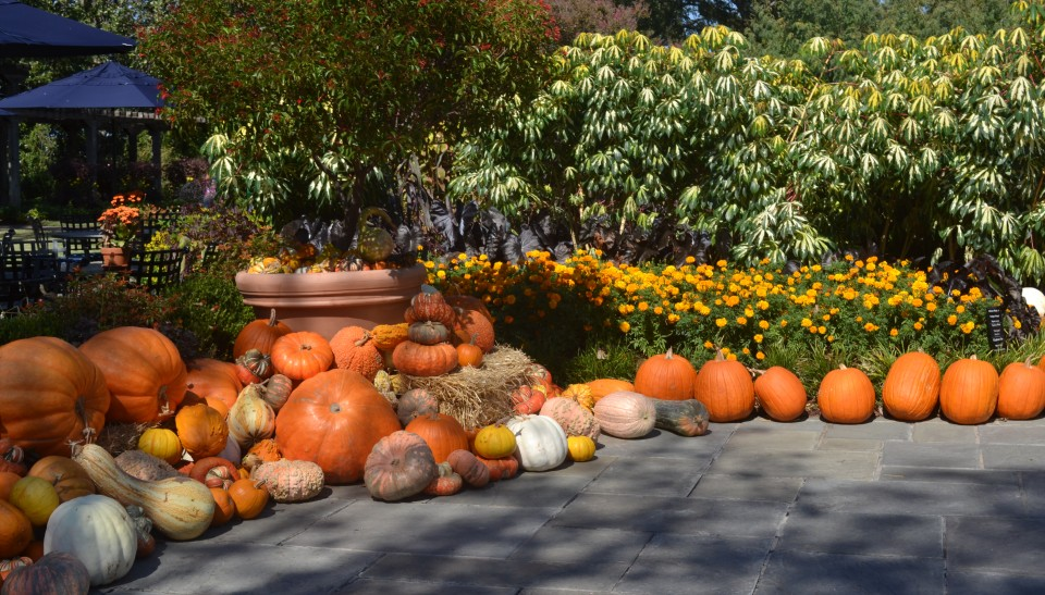 Fall festival at the arboretum - Botanic gardens pumpkin festival ...