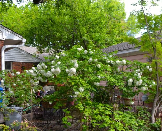 Miss Jane's Garden